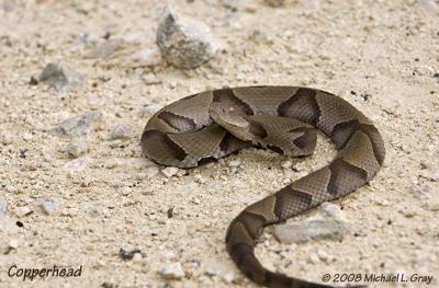 Snake 101