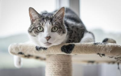 Pet Talk: A scent-sitive subject: Essential oil diffusers and your cat