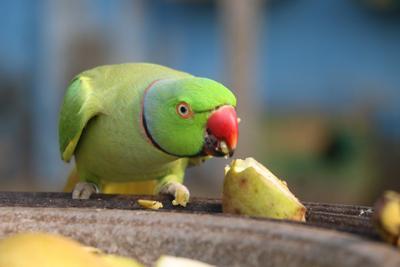 Pet Talk: Feeling Peckish: Nutritional disease in pet birds