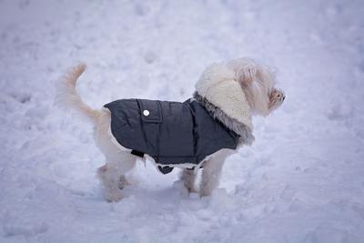 Pet Talk: Keep outdoor pets safe and warm