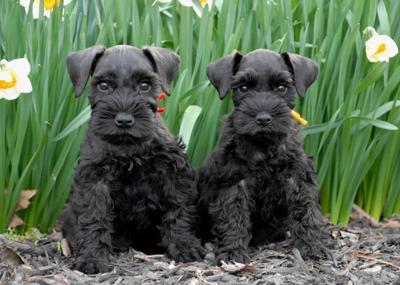 Pet Talk: Managing canine diabetes