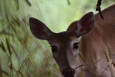 Woods, Water & Wildlife: As one door closes