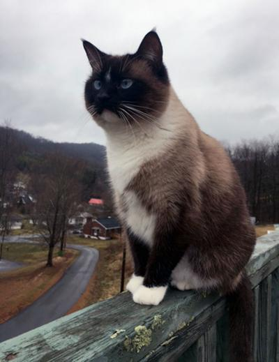 Officials propose ordinance to tax cat owners | News | bdtonline com