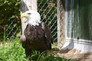 National symbol spotted in Tazewell County farm