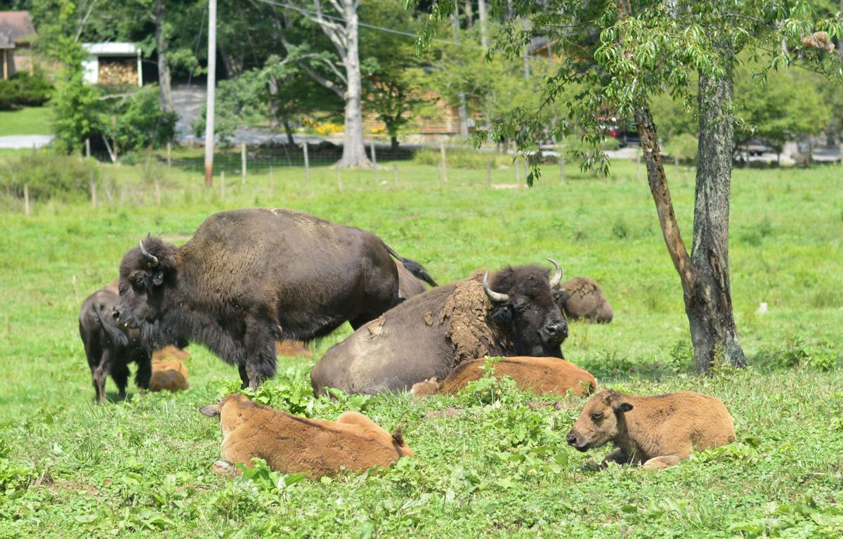 E Buffalo Channel Buffalo Trail expands ...