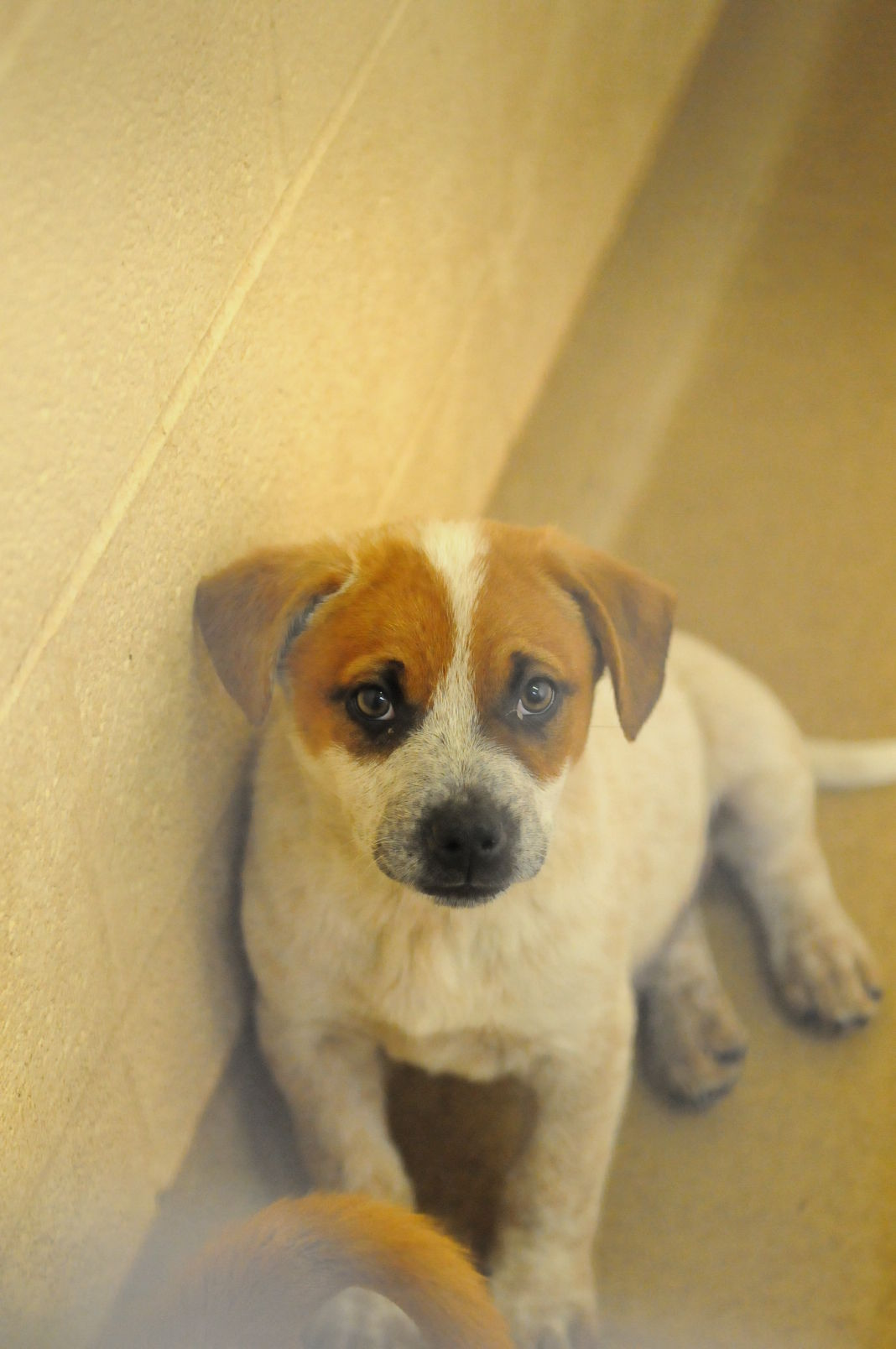 Slideshow: Animals ready for adoption at the Mercer County
