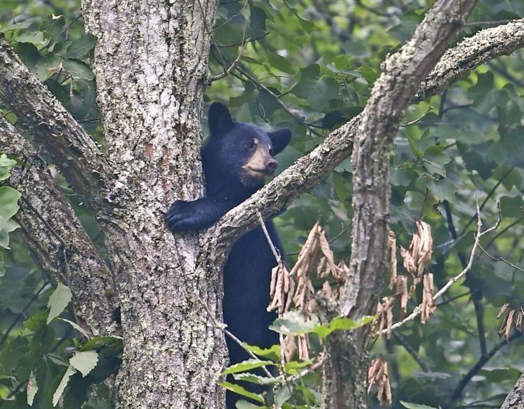 Spring brings region fresh flowers, warmer air and hungry black bears