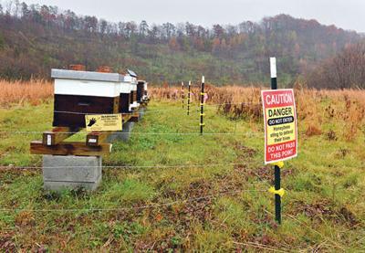 Beekeeping Mines