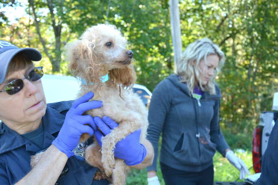 32 Dogs Transferred To Tazewell County Animal Shelter After Oct 12 Home Raid News Bdtonline Com