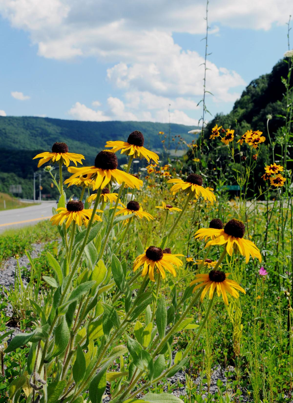 Wildflowers and East River Mountain 1.jpg