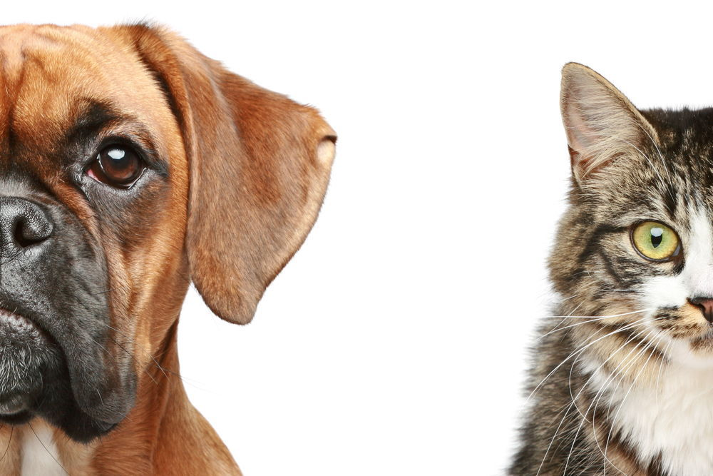 Top 8 Cat-Friendly Dog Breeds