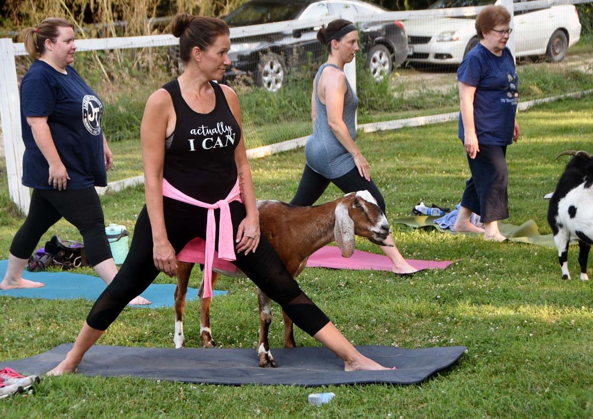 Beatrice Ymca Instructs Goat Yoga Classes At Local Rescue Center Fitness Beatricedailysun Com