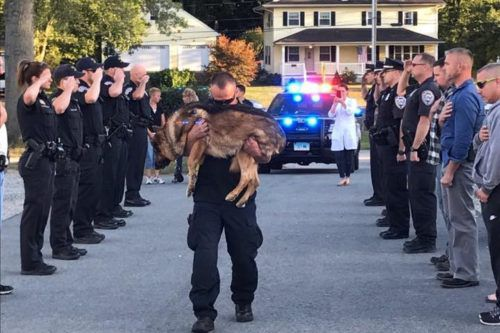 Connecticut Police Dog Receives The Hero's Funeral He Deserves