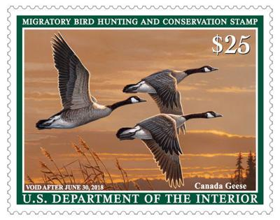 The 2017 2018 Federal Duck Stamp Has Been Released You Can Pick One Up At Your Local Post Office Nebraska Game And Parks Commission Offices Many Other