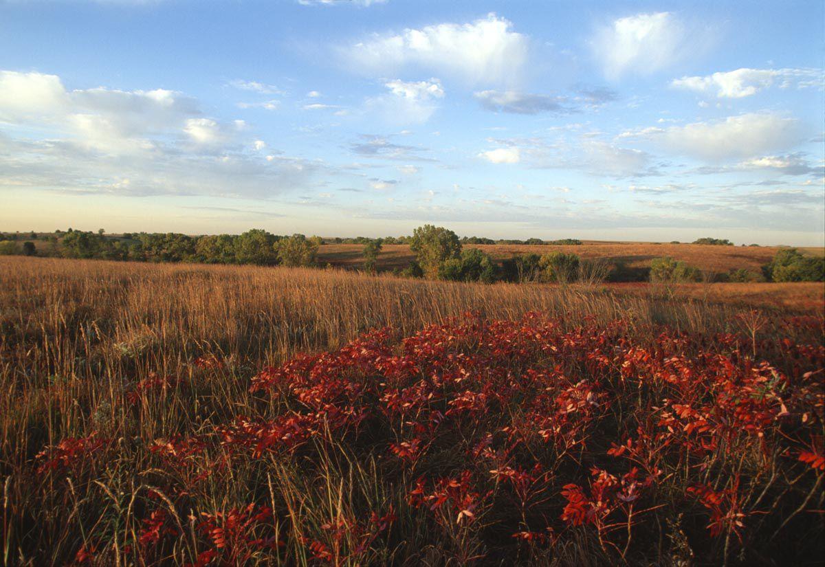 Nine Mile Prairie
