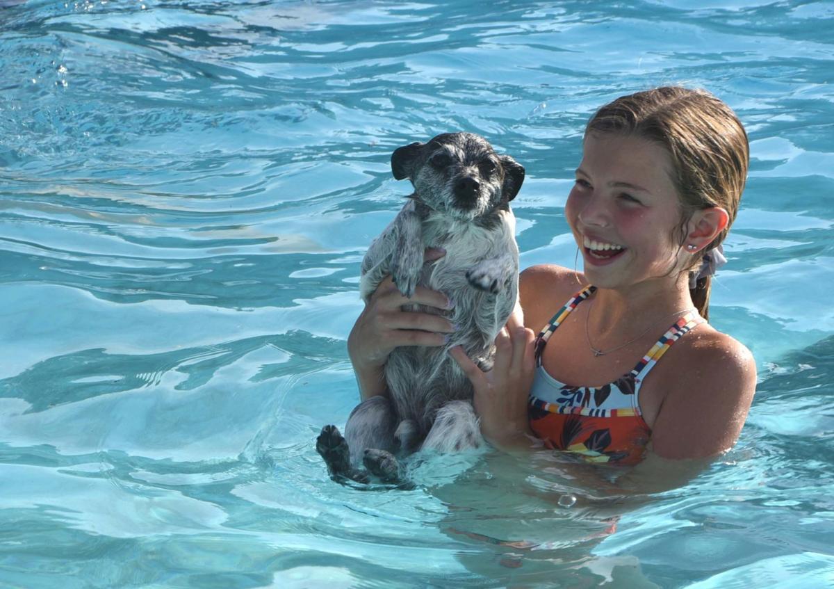 dog pool 1