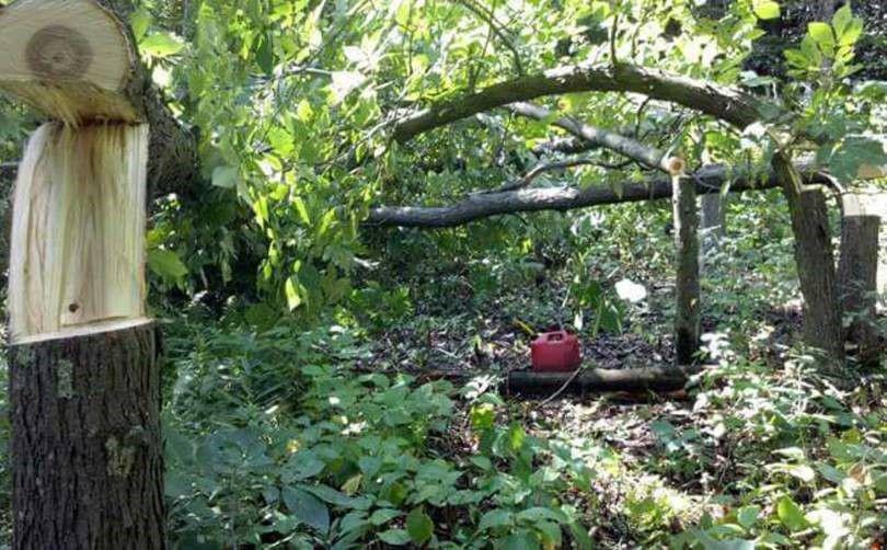 Hinged trees