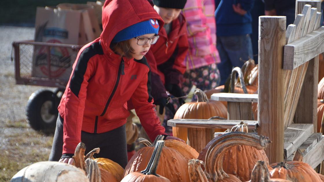 Lincoln Elementary kindergartners visit Korner Pumpkin Patch