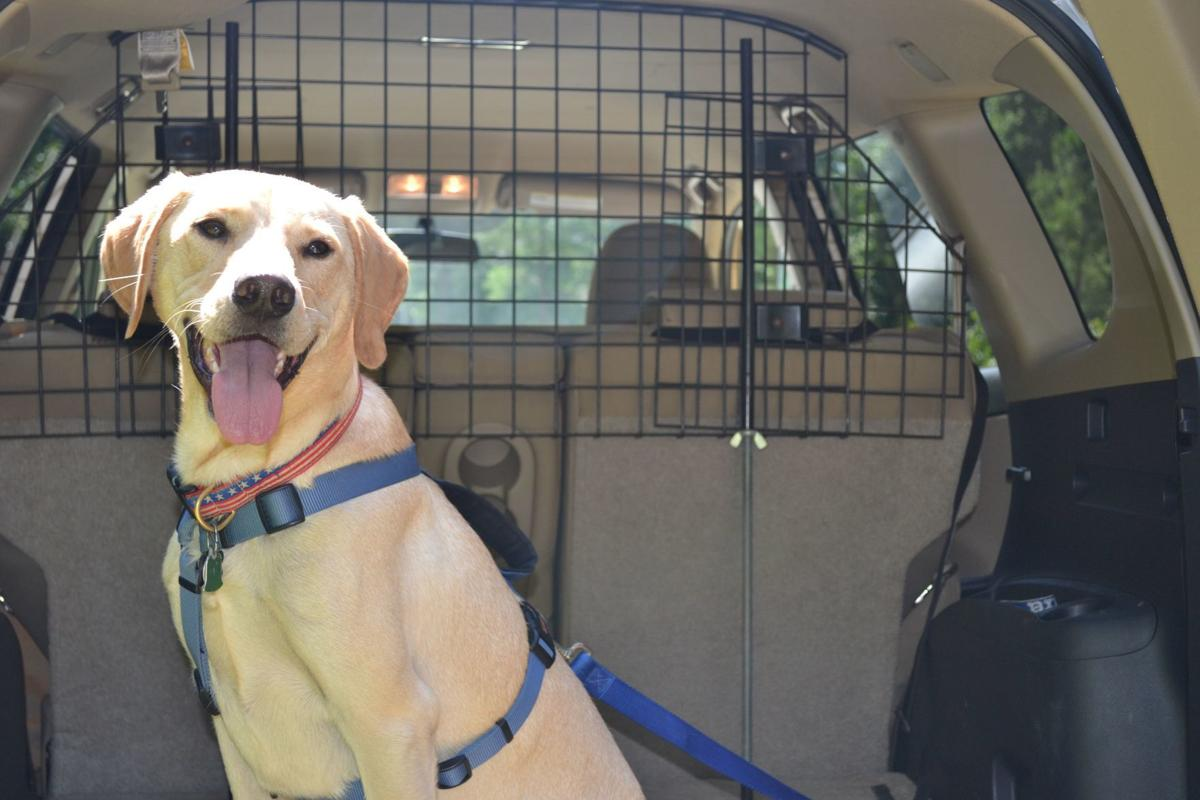 Don't forget your pet!  Securing your furry precious cargo in your vehicle (image)