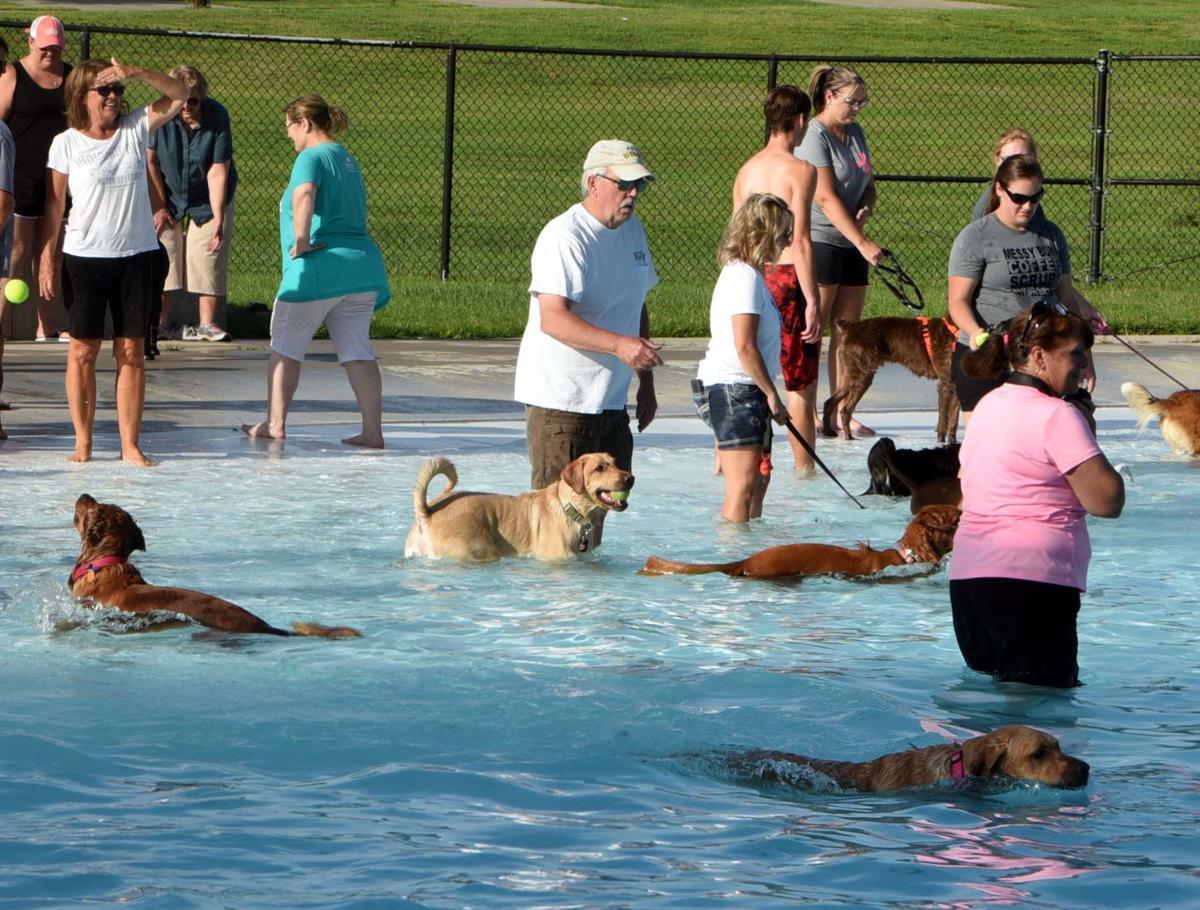 dog pool 2