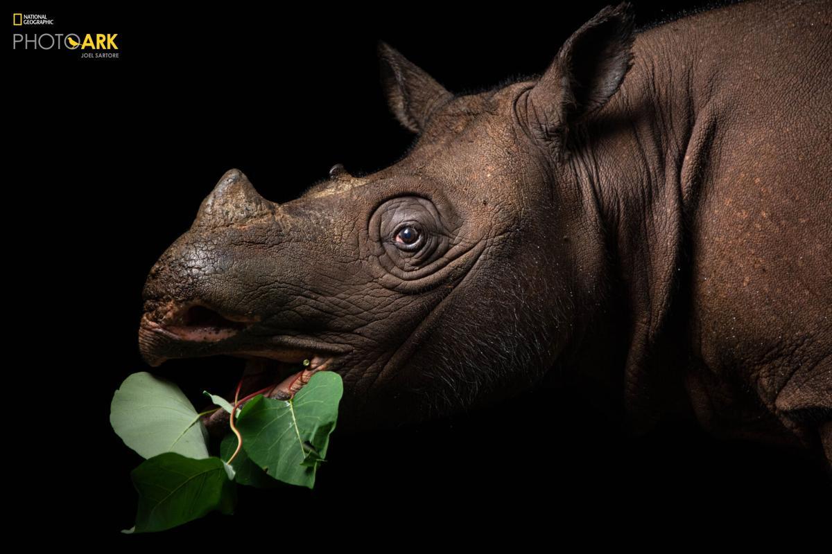 Joel Sartore, National Geographic Photo Ark
