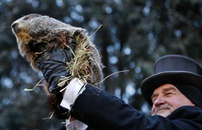 Punxsutawney Phil predicts the Weather on Groundhog Day, USA - 02 Feb 2019