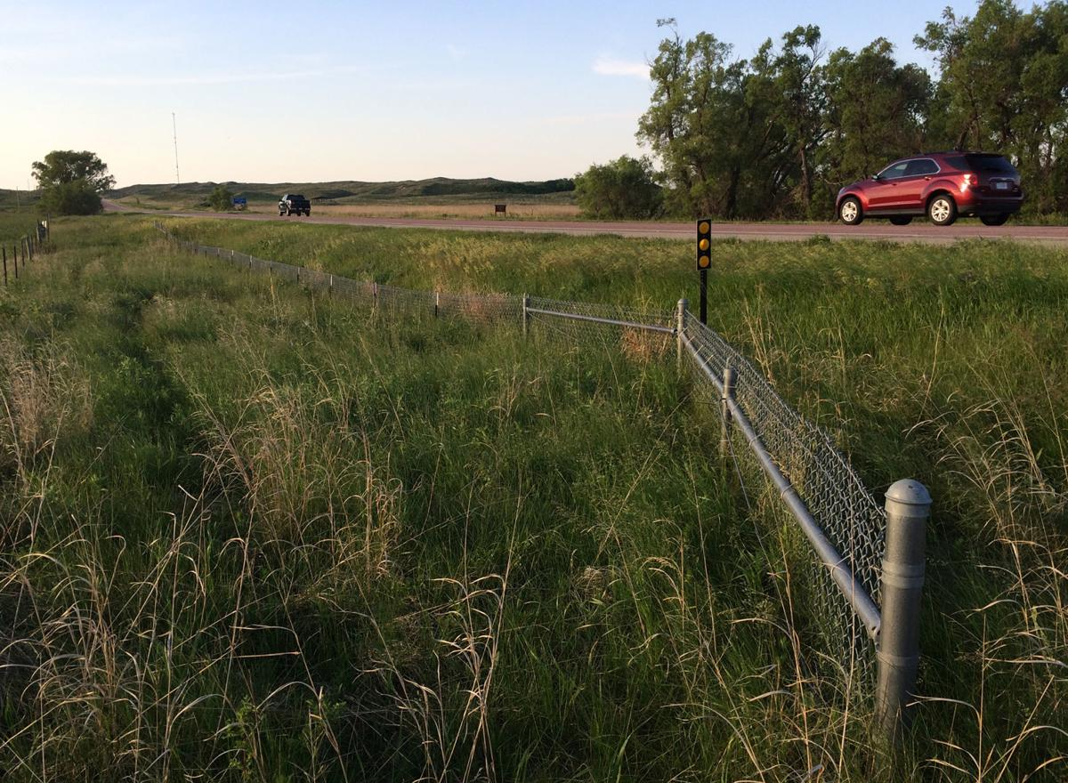 Fixing Fence In The Sandhills Knee High Turtle Barriers