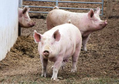POTD-Swine Facility-4 1 15.jpg