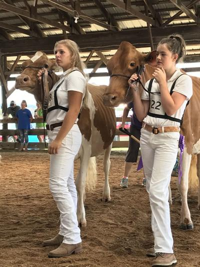 State dairy qualifiers