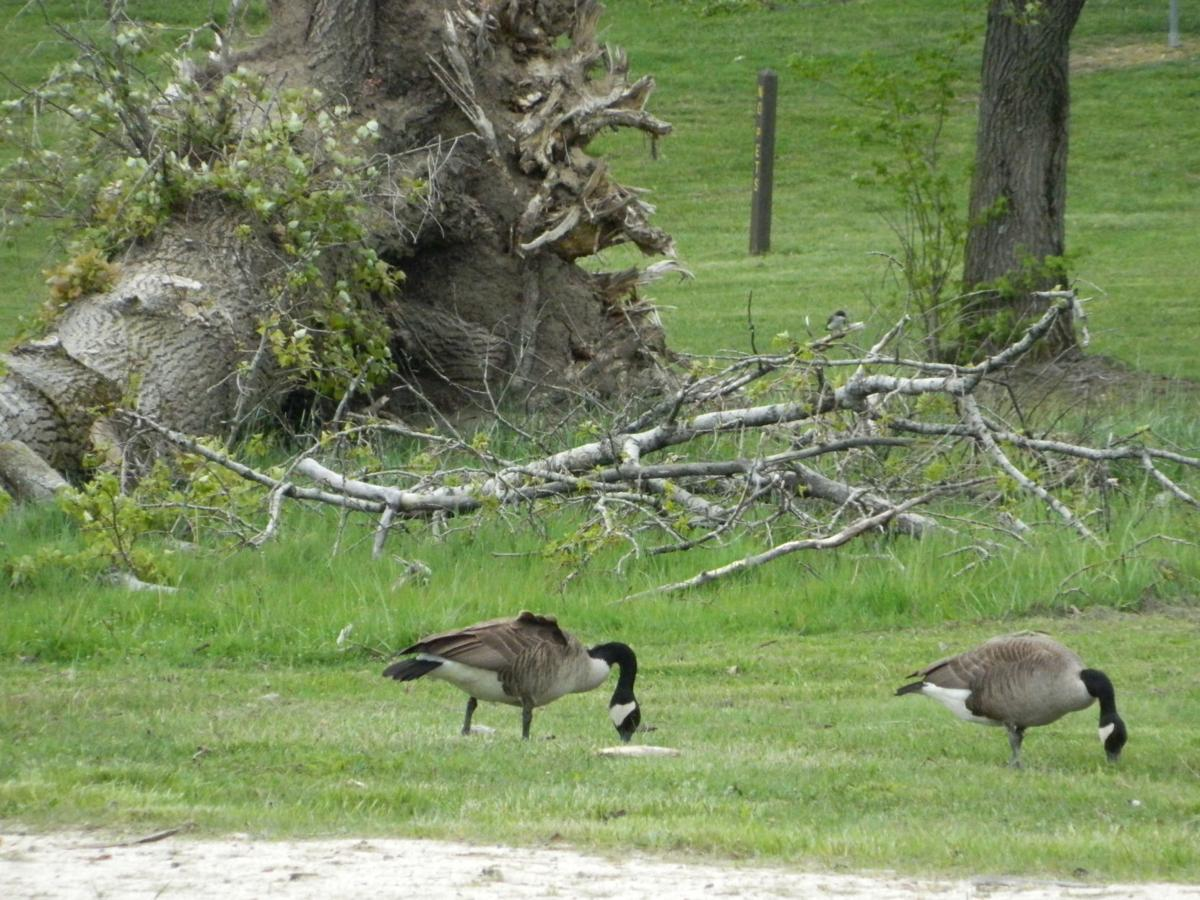 Ducks at Shawnee