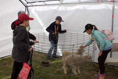 Farm fair 2019