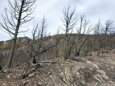 Bridger Foothill Fire