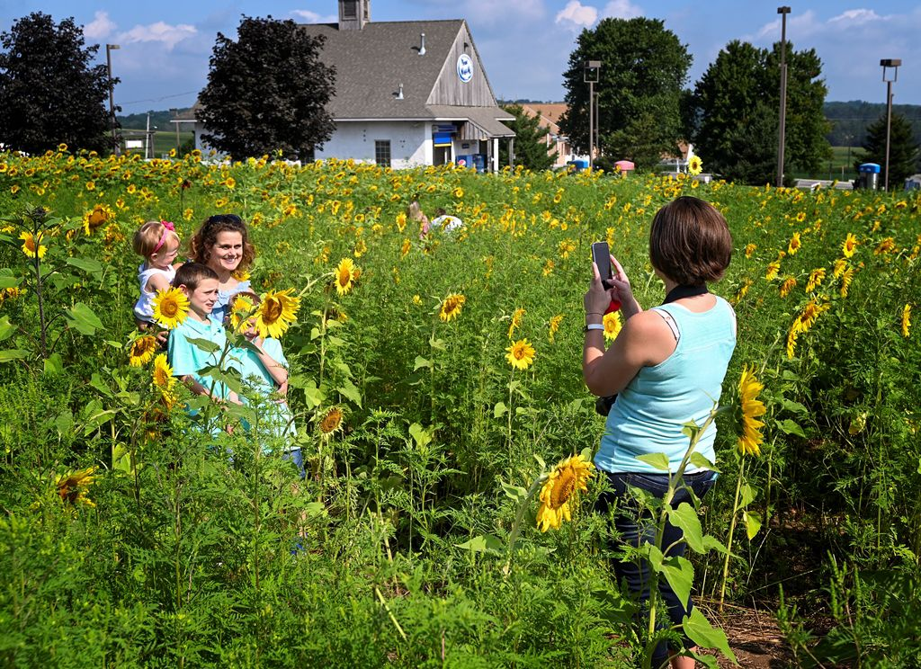 memories recorded at sunflower field