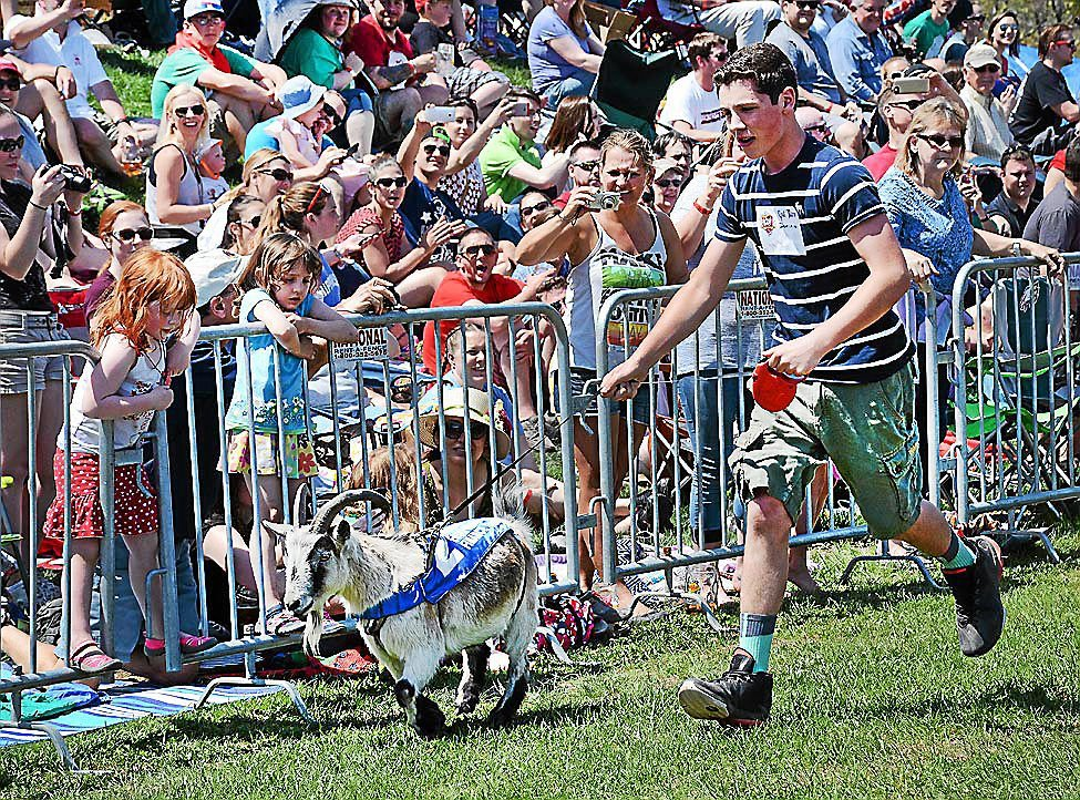 Sly Fox Bock Fest and Goat Race set to return this Sunday