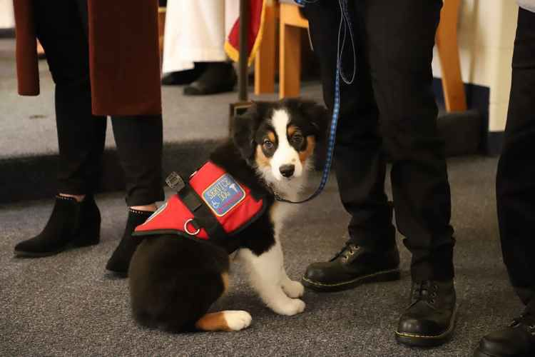 Service dog to be named for late Exeter veteran