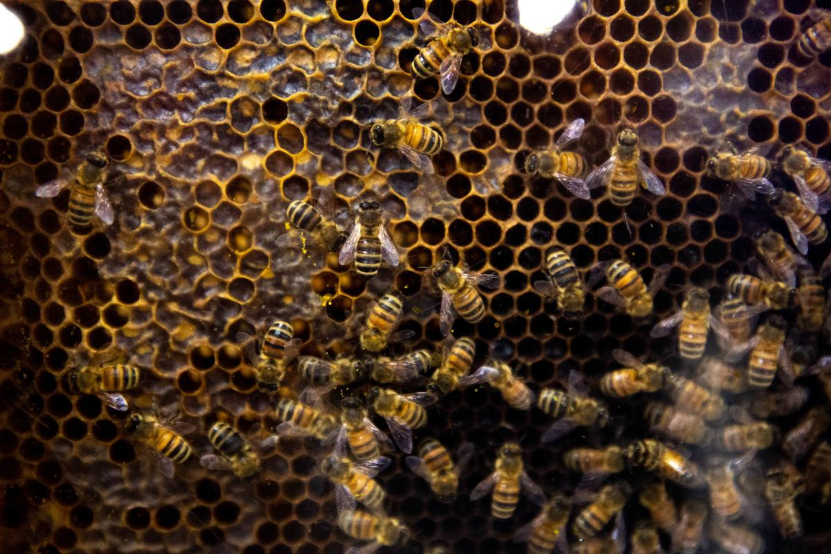 News_beekeepingschool020220-1.jpg