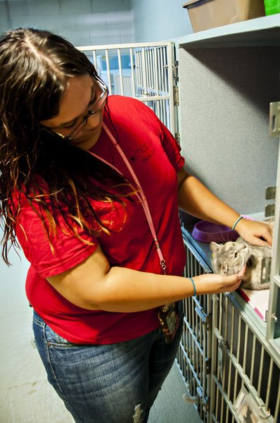 Logan County Humane Society shelter still needs help