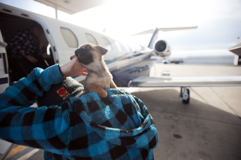Plane trips connect shelter animals with new homes