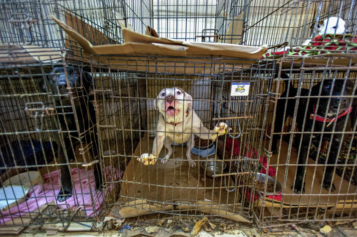 Logan animal shelter comes under scrutiny