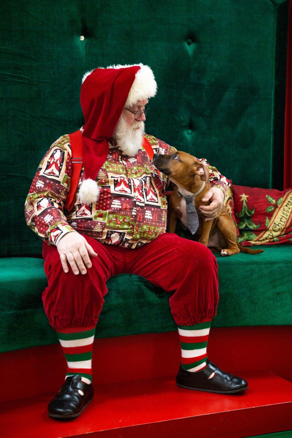 Furry friends meet Santa Claus at Greenwood Mall