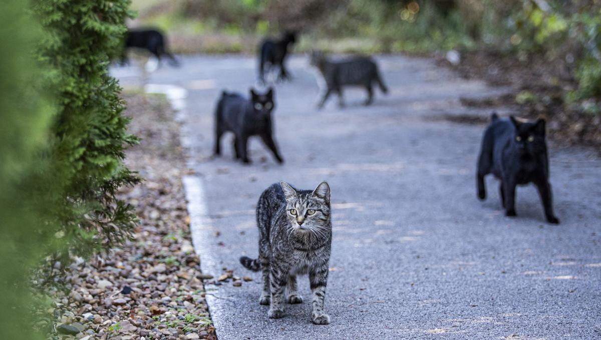 Feral cats