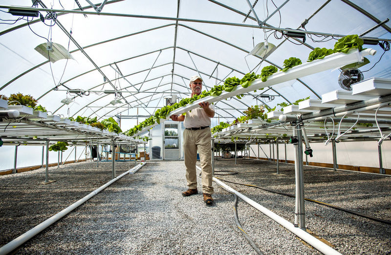 Hydroponics an efficient growing method for produce