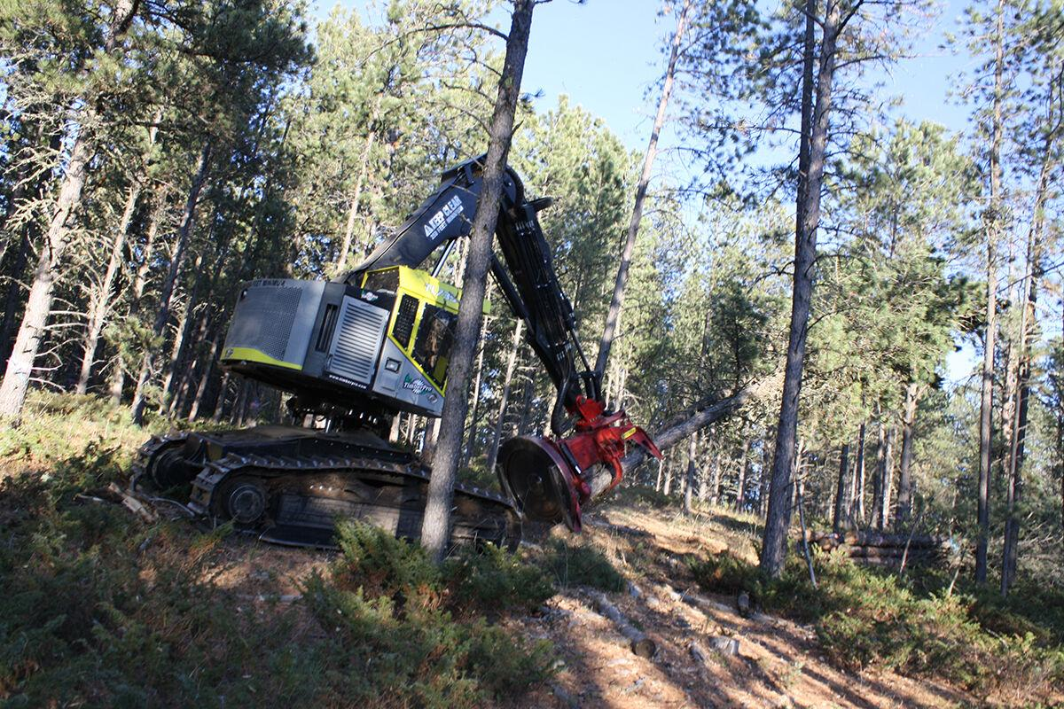How timber sells, through timber sales in the Black Hills