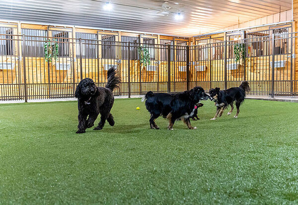 Pampered pet palace opens in Sturgis