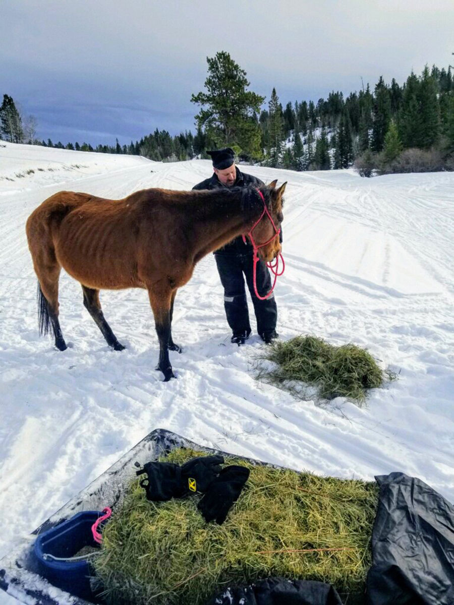 Stray and starving horse rescued near Buckhorn, Wyo.