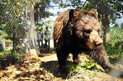 11 animals removed from wildlife sanctuary