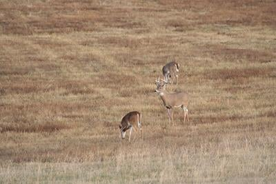 EHD outbreaks lead to unsold deer tags withdrawn