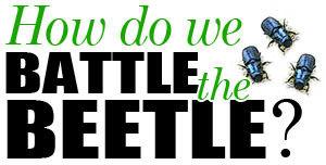 Lawrence Co. seeks beetle fight funding