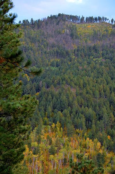 Million-acre forest plan designed to make Black Hills more resilient to fire, bugs