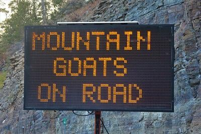 Mountain goat assonance